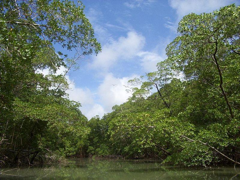 amazonsky-prales