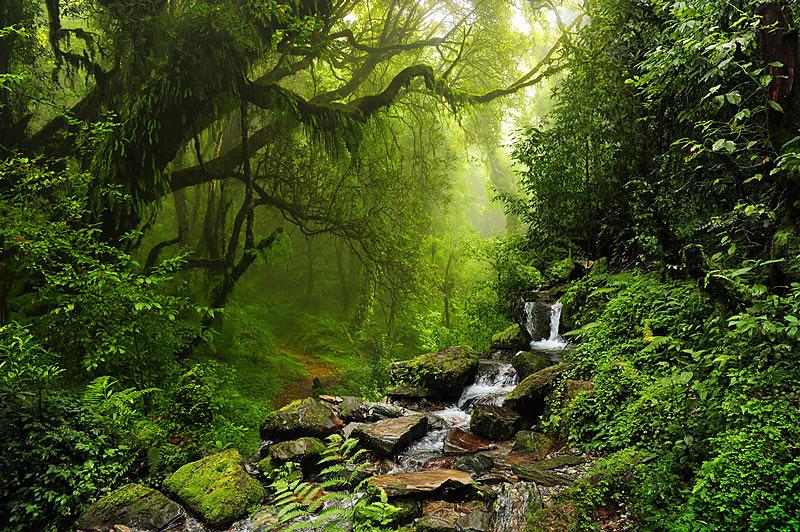 dazdovy prales