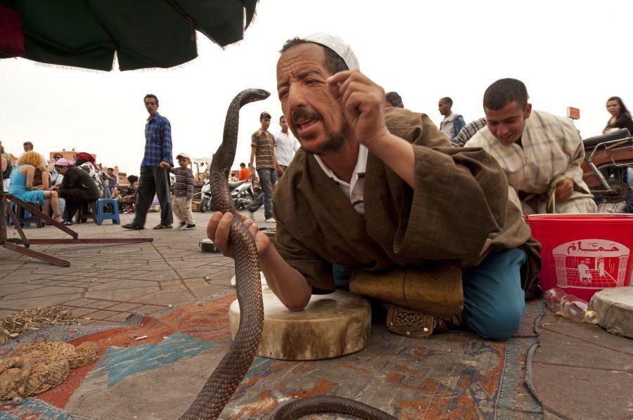 zaklinac hadov