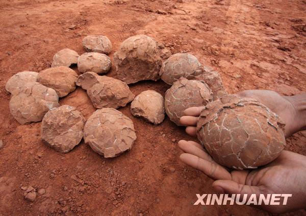 skamennene dinosaurie vajcia pust gobi