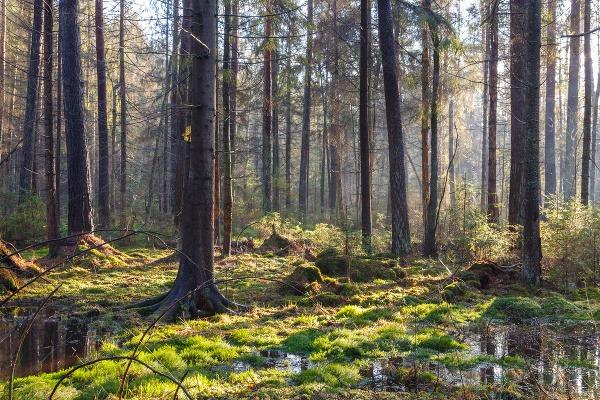 bielovezsky prales