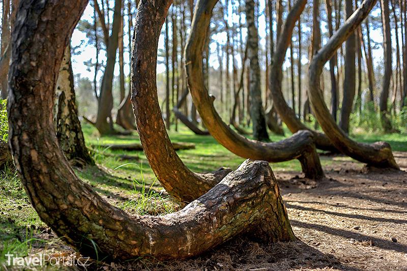 krivy les
