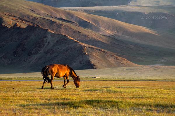 Mongolia 2011