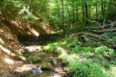 karpatske bukove pralesy